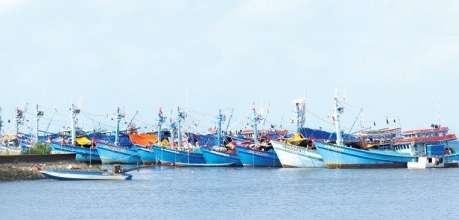 Tàu thương mại & Tàu cá - Phú Thái Cat